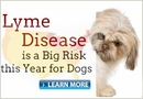 The Risk of Lyme Disease in Dogs | HealthyPets