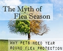 There is No Flea Season � Protect Your Pet Year Round | Healthypets