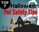 Top 7 Halloween Pet Safety Tips