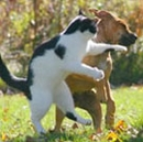 What to do About Pet Aggression