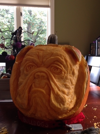 The Bulldog Pumpkin