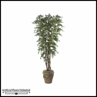 10' Ming Aralia - Green | Indoor