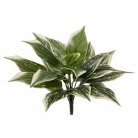 11in. Dracena Marginata, Outdoor Rated