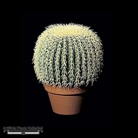 12in. Barrel Cactus - Green|Indoor