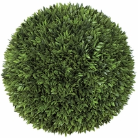 12in. Podocarpus Topiary Ball - Indoor