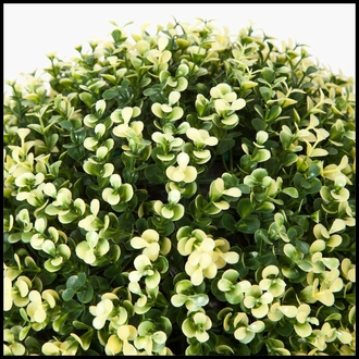 15in. Variegated Boxwood Topiary Ball - Outdoor