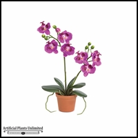 "16"" Orchid W/Roots - Purple 