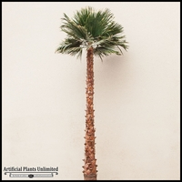 8' Preserved Washingtonia Palm Tree