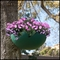"""17"""" Fiberglass Hanging Basket - 20 colors to choose from!"""