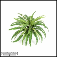 18in. Boston Fern - Green|Indoor