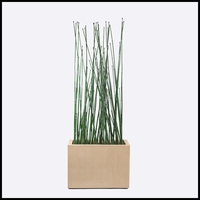 3'L Horsetail Grove in Modern Planter, Outdoor
