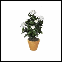 19in. Outdoor Artificial Gardenia - White