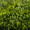 20in. x 20in. Replica Common Boxwood Mat - Buxus Sempervirens