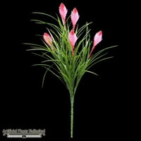 21in. Bromeliad Tillandsia Cyanea - Outdoor - Pink