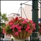 "22"" English Garden Flat Steel Hanging Basket with Coco Liner and Chain"