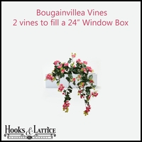 "24"" Window Box Recipe for Bougainvillea Vines"