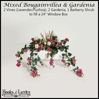"24"" Window Box Recipe for Mixed Bougainvillea - Lavender/Fuchsia"