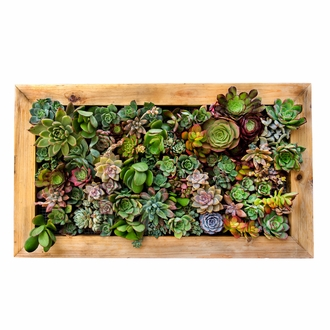 24in. Living Wall Planter