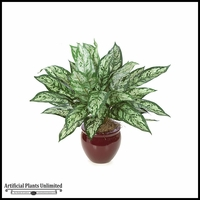 "26"" Aglaonema Bush - Gry/Green 