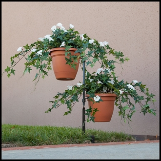 26in. Morning Glory Vine, Indoor Rated - Cream