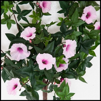 26in. Morning Glory Vine, Outdoor Rated - Pink