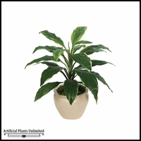 27.5in. Dracaena Plant - Green|Indoor