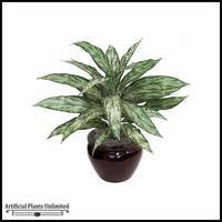 27in. Aglaonema - Grey/Green|Indoor