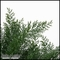 27in. Outdoor Rated Artificial Spreading Juniper