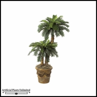 3' & 5' Sago Palm Cluster - Green | Indoor