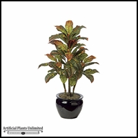 3' Croton Bush - Multi|Indoor