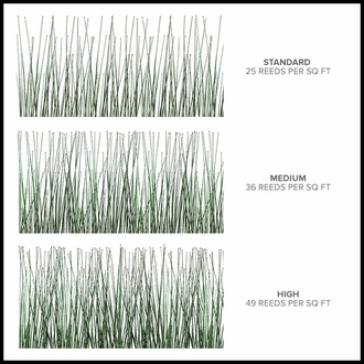 3'H Horsetail Reed by the Square Foot, Outdoor