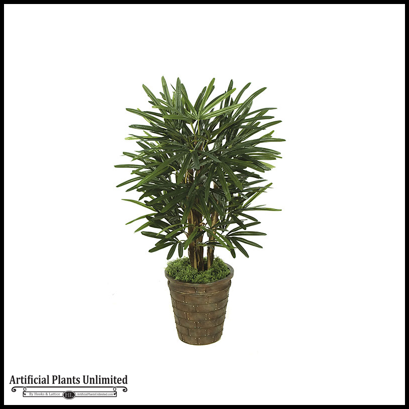 3 39 lady palm tree green indoor for Pictures of indoor palm plants