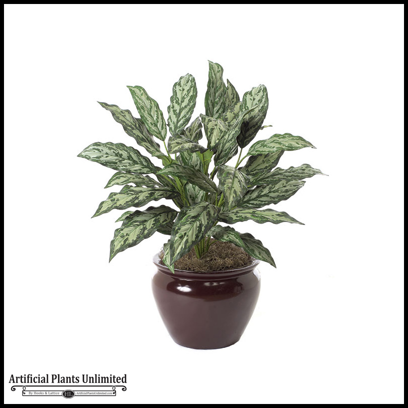 30in aglaonema plant two tone green indoor for Indoor green plants images