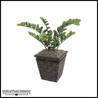 30in. Nat Touch Zamia Plant - Green|Indoor