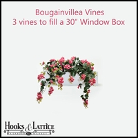 "30"" Window Box Recipe for Bougainvillea Vines"