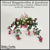 "30"" Window Box Recipe for Mixed Bougainvillea - Lavender/Fuchsia"