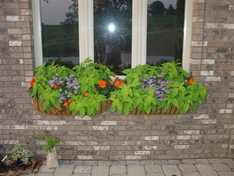 30in. XL Carolina Window Box w/ XL Coco Liner
