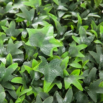 30in. Outdoor Artificial Ivy Hedge in White Window Box