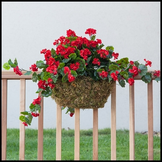 30in. Red Geranium Hanging Vine, Outdoor Rated