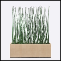 6'L Horsetail Grove in Modern Planter, Indoor