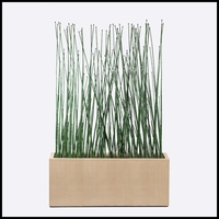 5'L Horsetail Grove in Modern Planter, Indoor