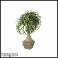 32in. Ponytail Palm - Green|Indoor
