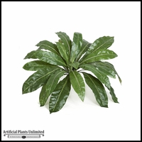 33in. Birds Nest Fern - Green|Indoor