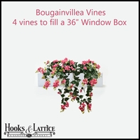 "36"" Window Box Recipe for Bougainvillea Vines"