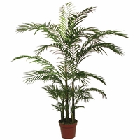 4.5' Areca Palm Tree, Outdoor Rated