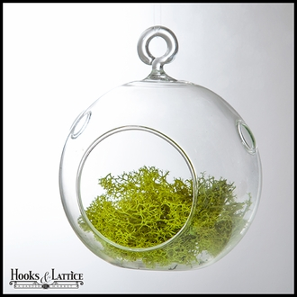 4.5 in. Terrarium Globe Kit with Moss