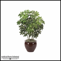 4' Baby Schefflera - Green/Yellow|Indoor