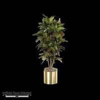 4' Croton Bush - Green/Yellow/Red | Indoor