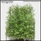 4'H Bamboo Forest Sold by the Square Foot, Outdoor