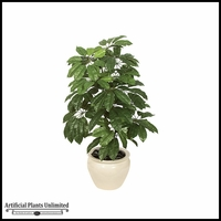 4' Schefflera - Green|Indoor
